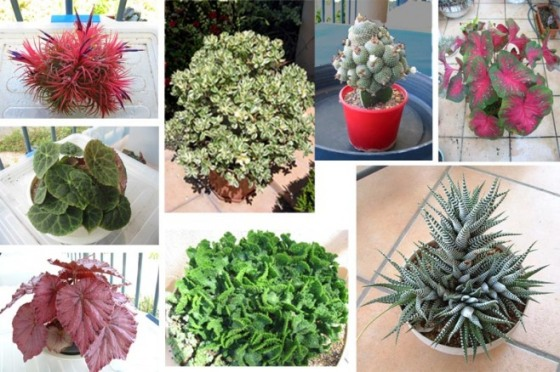 The Diversity and Beauty of Potted Plants