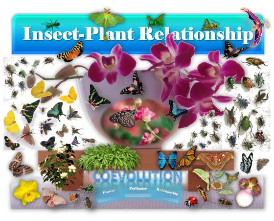 SoundEagle in Insect-Plant Relationship