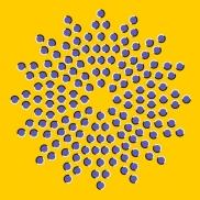 Optical Illusion 87